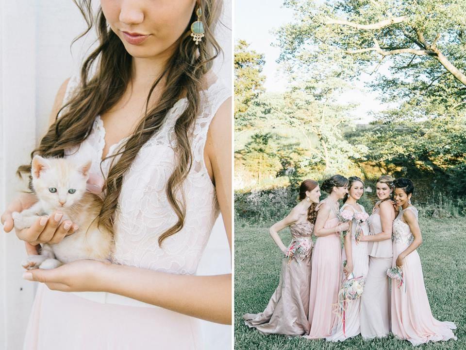 Kitten at wedding with bride