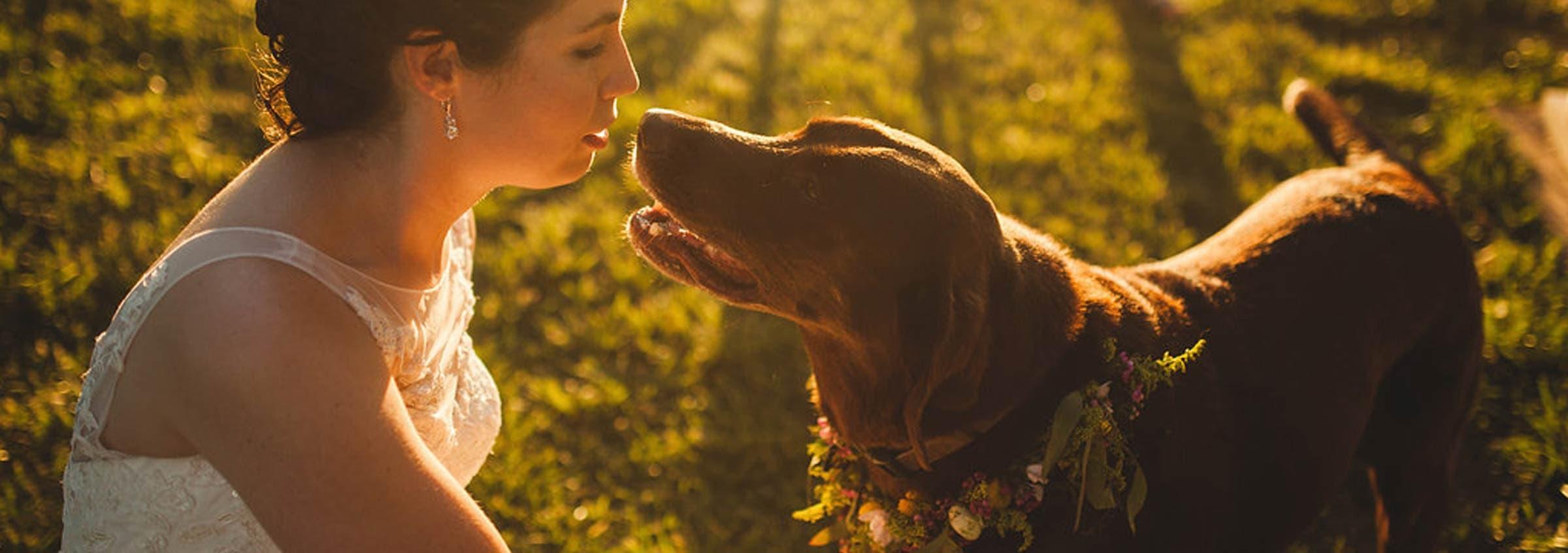 wedding-dog-flowers